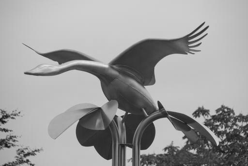 zwaan van Kuinre